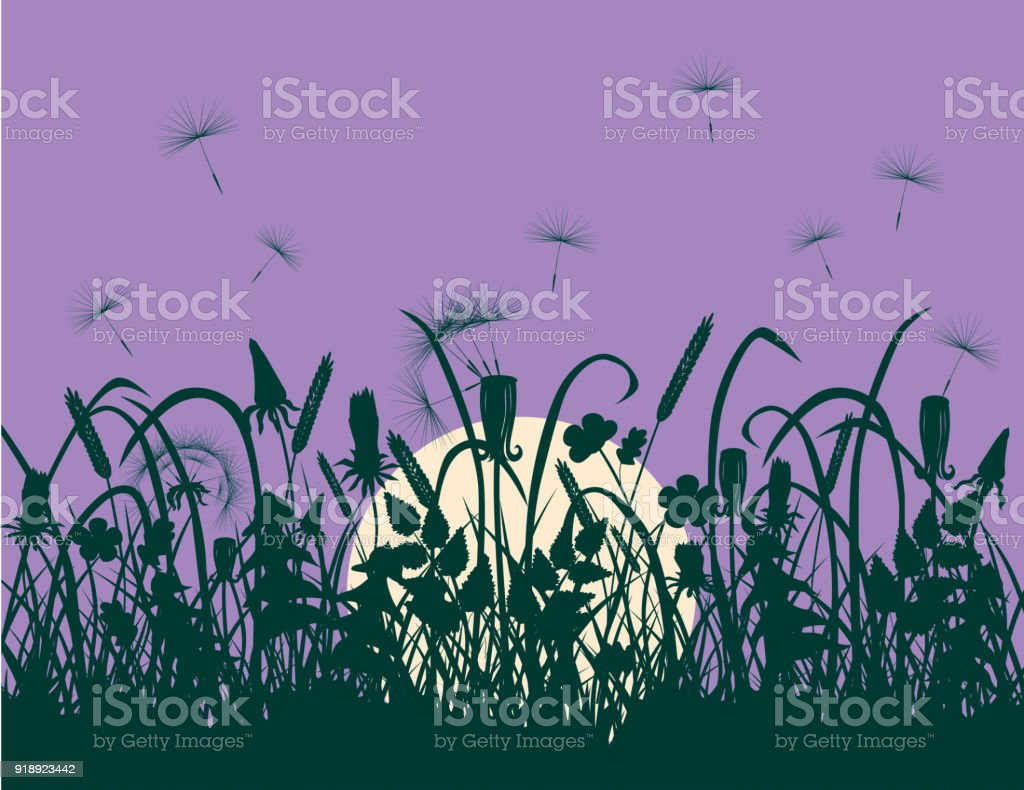 Wildflowers at sunset vector art illustration
