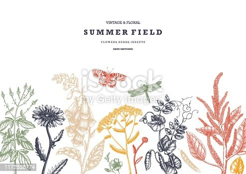 Summer wild flowers background. Floral card or invitation design. Hand drawn herbs, weeds and meadows. Vintage flowers with insects drawings. Vector template with botanical elements. Outlines