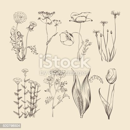 Wildflowers, herbs and flowers. Spring and summer botanical vector collection. Flower spring, herb and flower nature, botanical hand drawing herbal and flower illustration