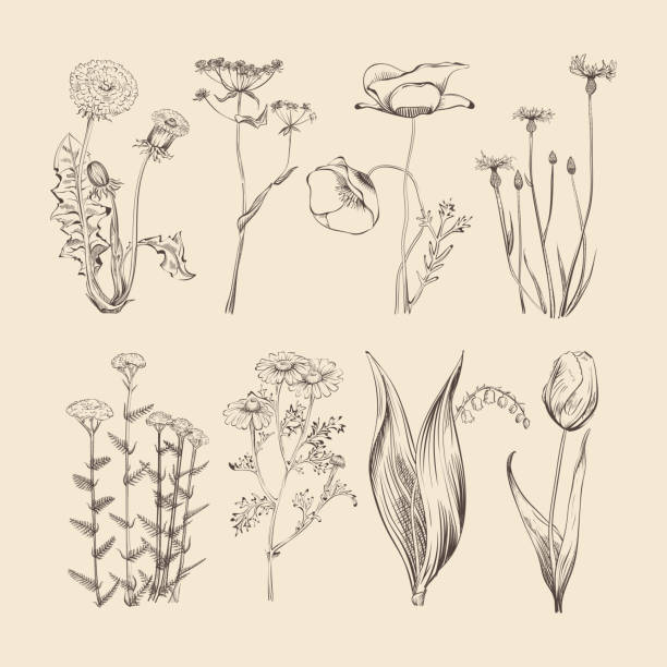 wildflowers, herbs and flowers. spring or summer botanical vector collection - wildflowers stock illustrations, clip art, cartoons, & icons