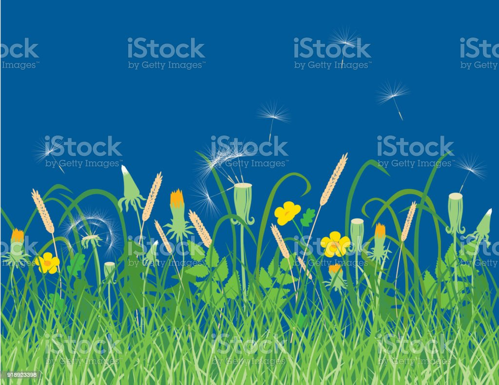 Wildflowers on a summer meadow vector art illustration