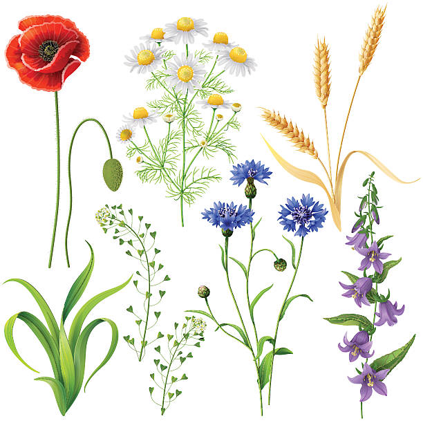 wildflowers  set - wildflowers stock illustrations, clip art, cartoons, & icons