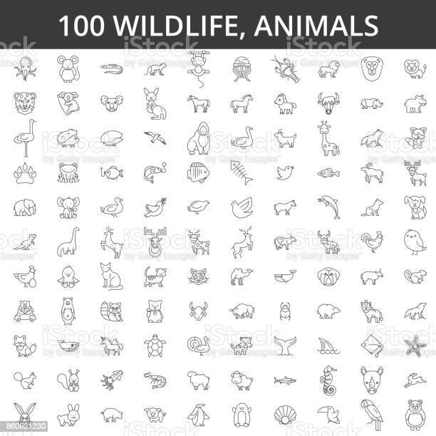 Wildlife african sea domestic forest zoo animals cat dog wolf fox vector id860621230?b=1&k=6&m=860621230&s=612x612&h=h3xoxwgdzu vznqcdusytryo9g ehbakkskmxovyaue=