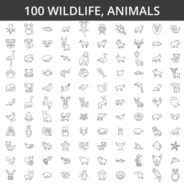wildlife african, sea, domestic, forest, zoo animals, cat, dog, wolf, fox, tiger, fish, bear, horse, dino, rhino, monkey line icons, signs. illustration vector concept. editable strokes - animals stock illustrations