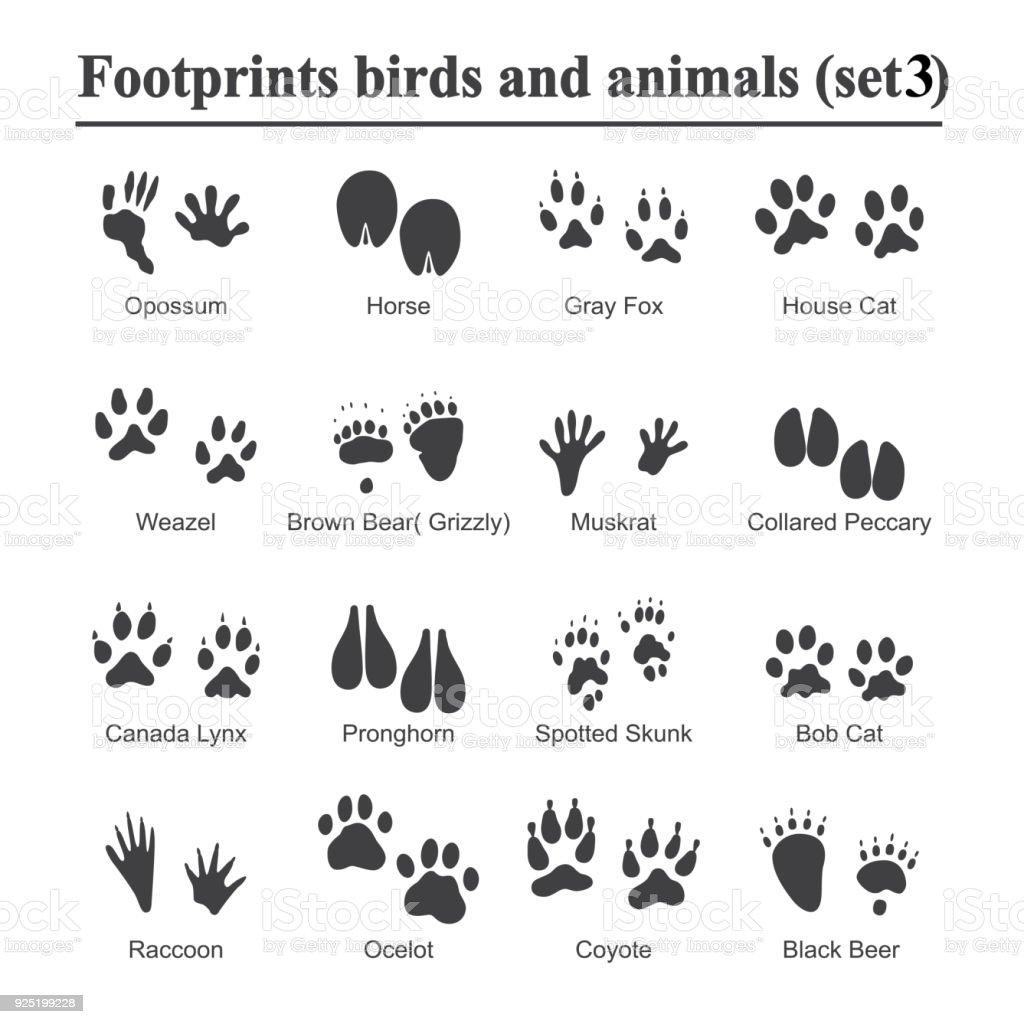 野生の動物や鳥のフット プリント動物足ベクトルのセットを印刷します