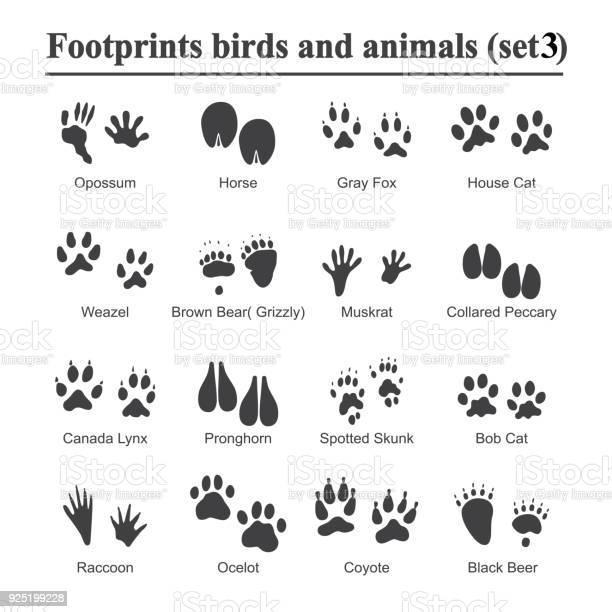 Wildlife animals and birds footprint animal paw prints vector set of vector id925199228?b=1&k=6&m=925199228&s=612x612&h=zbououzi8p322jwim5akgzavlaacunjvjaxr7tikhay=