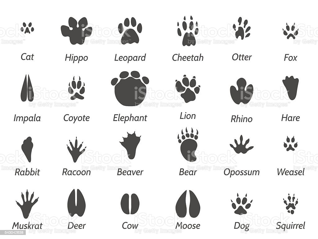 Wildlife animals footprints vector art illustration
