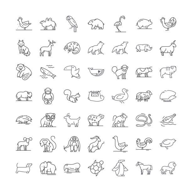 Wildlife animals linear icons, signs, symbols vector line illustration set Wildlife animals line icons, signs, symbols vector, linear illustration set wildlife stock illustrations