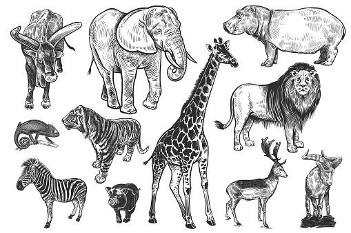 Wildlife animals set. Lion, elephant, zebra and others. Vector.