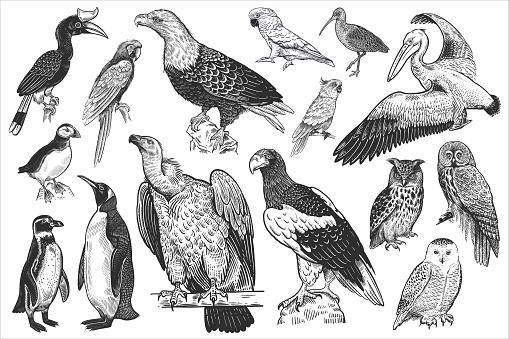 Wildlife birds set. Tropical, exotic, water birds. Vector.
