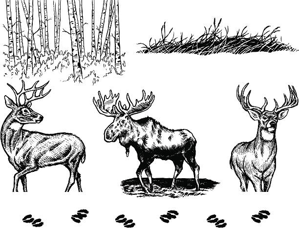 Wildlife Elements A collection of hand-drawn wildlife elements in black and white.  elk stock illustrations