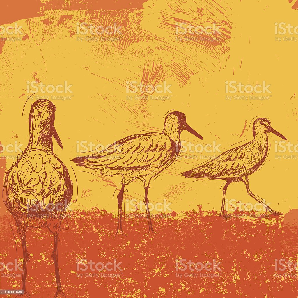 Willets at sunset royalty-free stock vector art