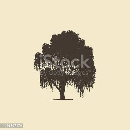Willow or Birch, hand drawn silhouette.Vector sketch of deciduous tree.