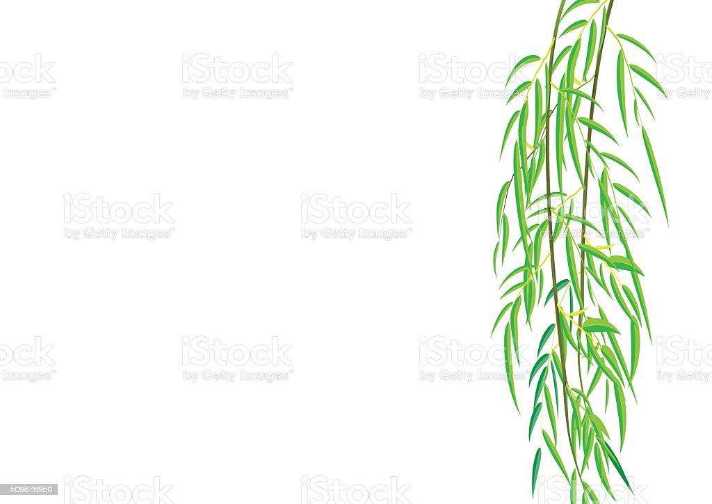 柳の木の枝ベクトルイラストレーション イラストレーションのベクター