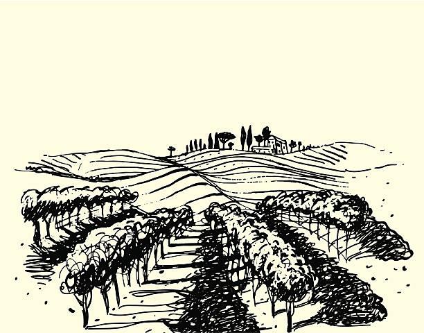 bildbanksillustrationer, clip art samt tecknat material och ikoner med wine & grape illustration. - vinodling