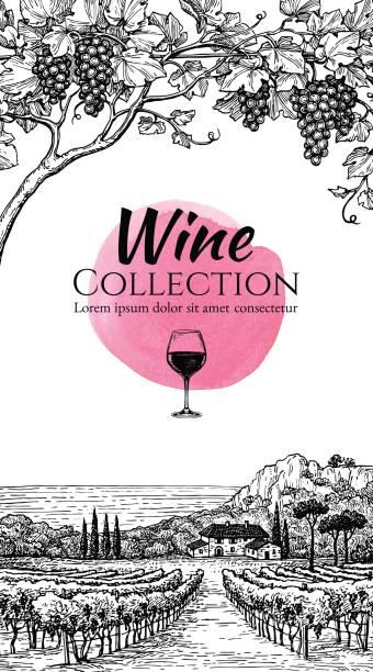 bildbanksillustrationer, clip art samt tecknat material och ikoner med vinlista formgivningsmall. - vindruva
