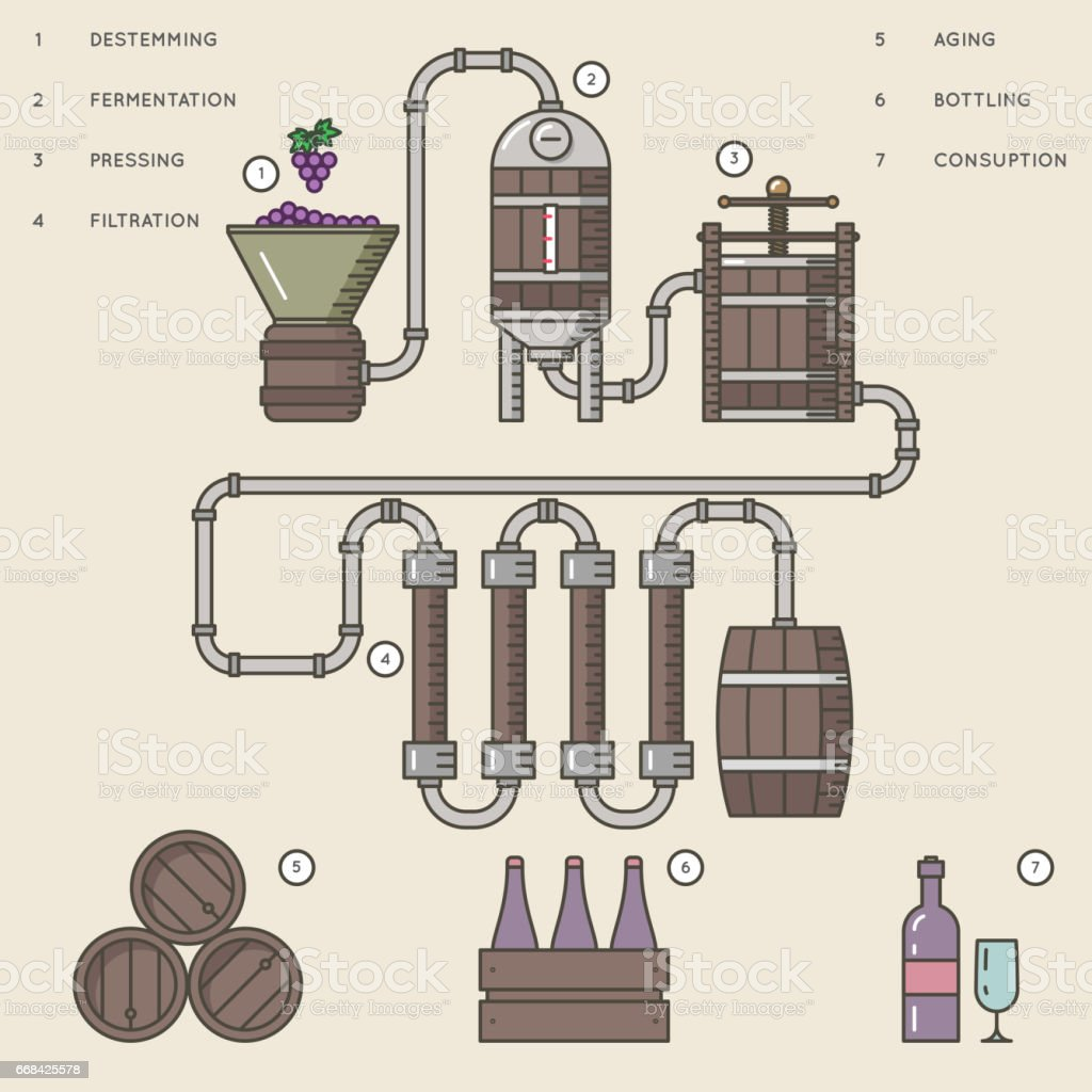 Wine making process or winemaking infographic vector illustration. vector art illustration