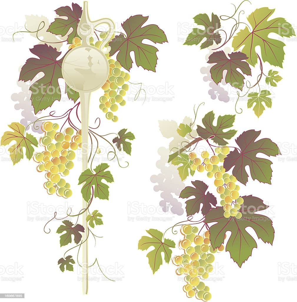 Wine Pipette & Grapevine Decoration vector art illustration