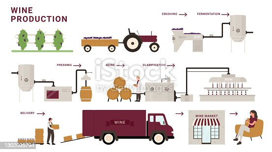 istock Wine production process stages, infographic cartoon modern winery factory processing line 1302035794