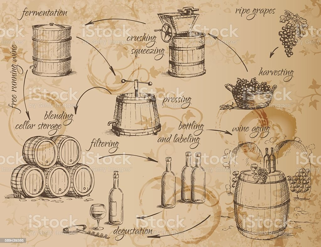 Wine production scheme vector art illustration