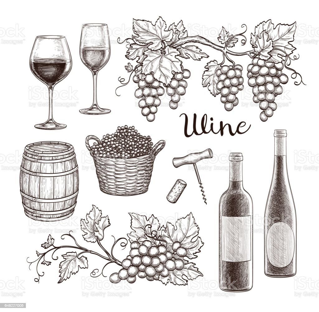 Wine Set Isolated On White Background Hand Drawn Vector ...