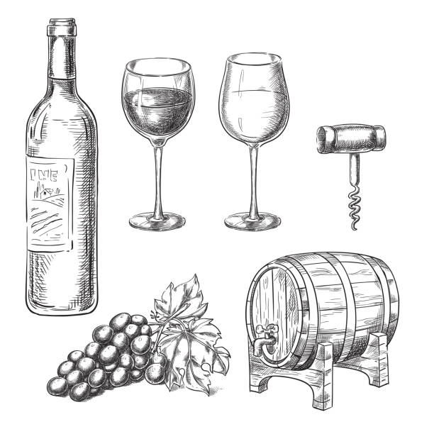 wine sketch vector illustration. bottle, glasses, grape vine, barrel, corkscrew, hand drawn isolated design elements. - butelka wina stock illustrations
