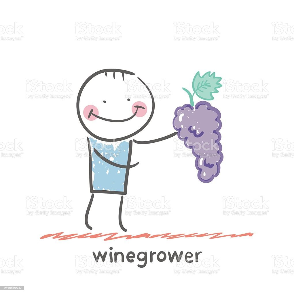 winegrower holds a bunch of grapes vector art illustration