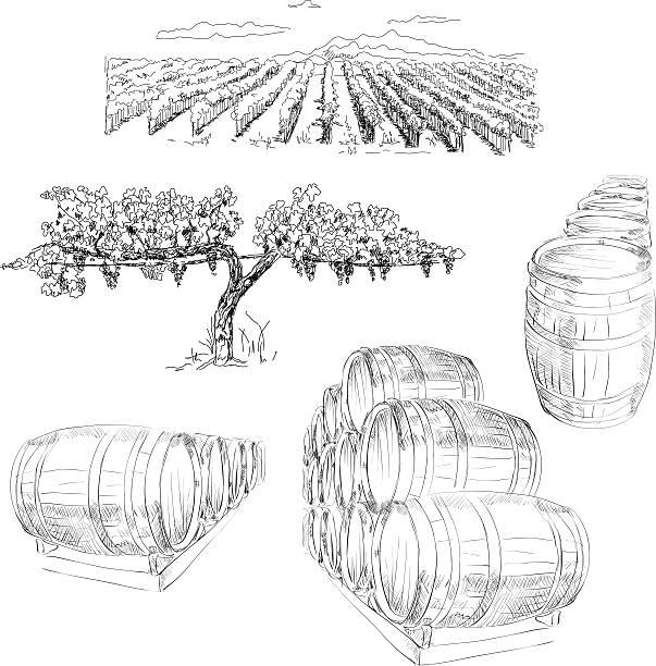 bildbanksillustrationer, clip art samt tecknat material och ikoner med winery - vineyard