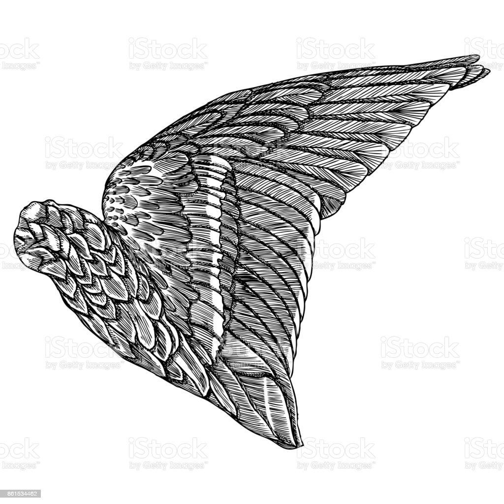 Flügel Hand Gezeichnet Detaillierte Vogel Flügel Für Karten Poster ...