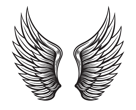 Wings set. Hand drawn detailed wings collection