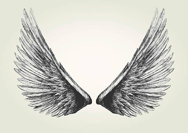 Wings - illustrazione arte vettoriale
