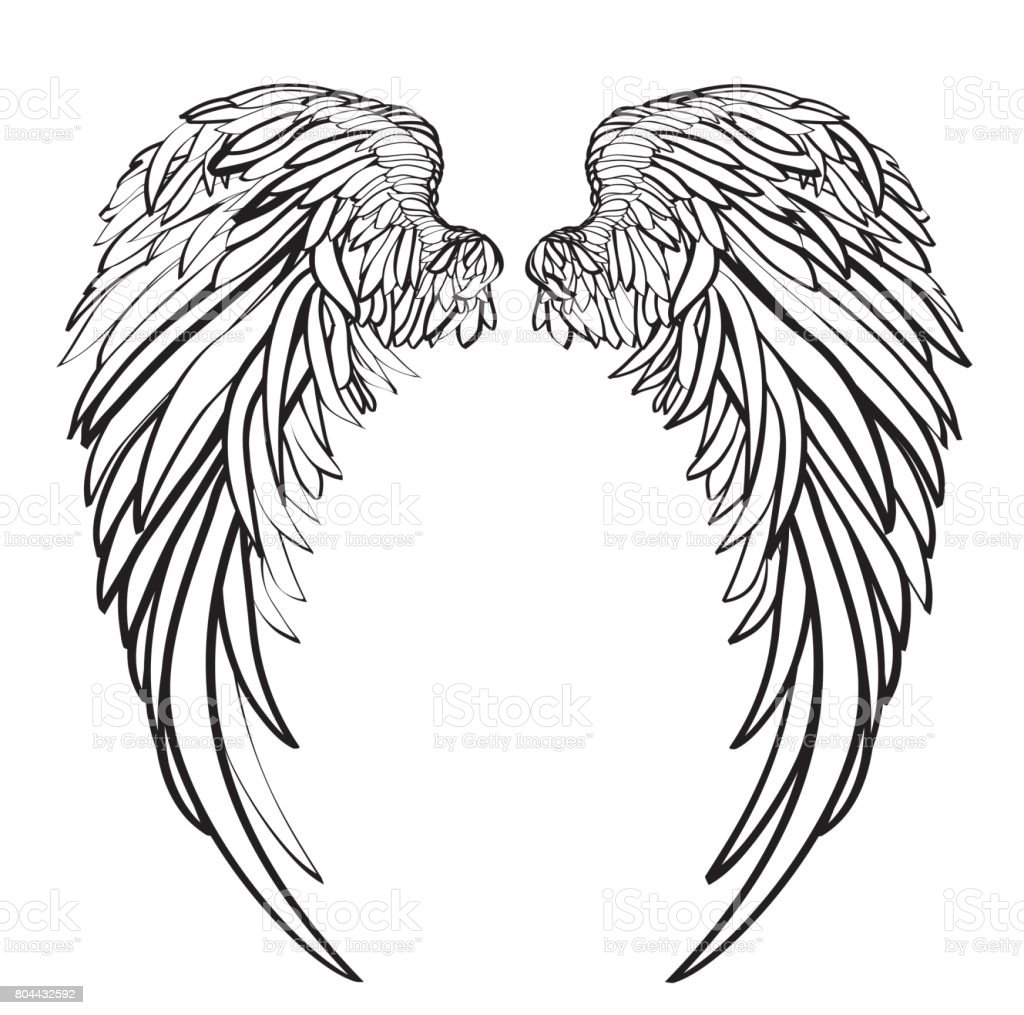 Wings. Vector illustration on white background. Black and white style vector art illustration
