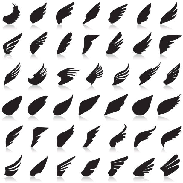 wings vector set of icons - animal wing stock illustrations