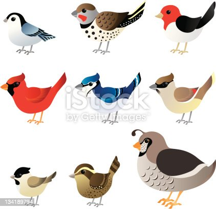 From left to right, top to bottom, nuthatch, flicker, red-headed woodpecker, cardinal, blue jay, cedar waxwing, chickadee, wren or finch, and partridge.