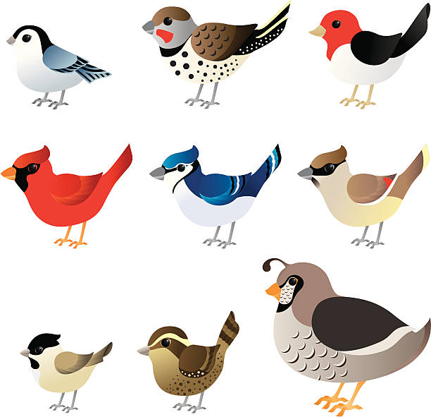 Winter birds commonly found in North America vector art illustration