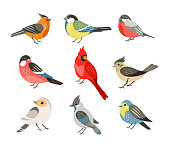 Winter birds flat vector illustrations set. Different wintertime songbirds isolated on white background. Red cardinal and bullfinch, blue tit and sparrow. Cute tufted titmouse, robin and jay