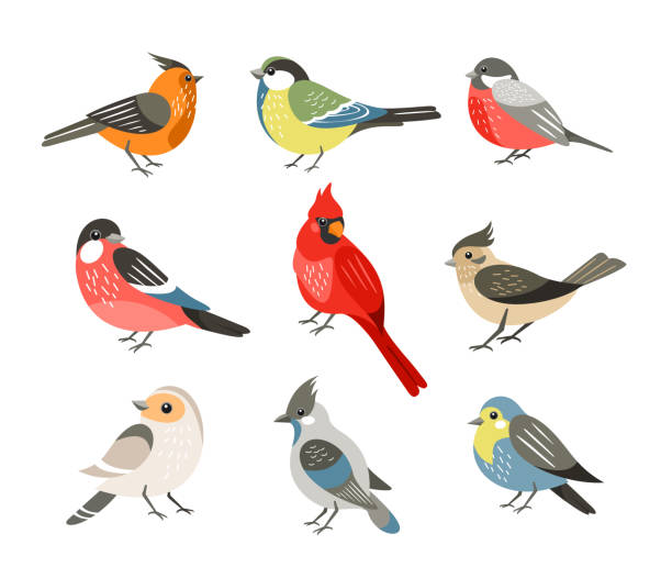 Winter birds flat vector illustrations set. Different wintertime songbirds isolated on white background. Red cardinal and bullfinch, blue tit and sparrow. Cute tufted titmouse, robin and jay. Winter birds flat vector illustrations set. Different wintertime songbirds isolated on white background. Red cardinal and bullfinch, blue tit and sparrow. Cute tufted titmouse, robin and jay finch stock illustrations
