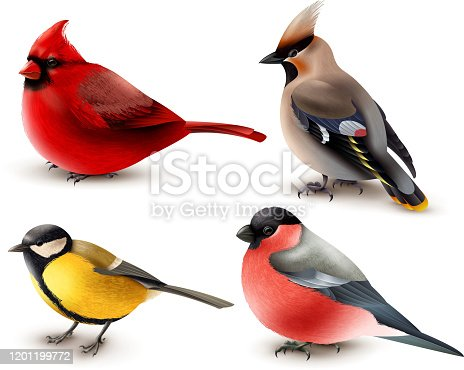 Set of winter birds with red cardinal, titmouse, waxwing and bullfinch, 3d design isolated vector illustration
