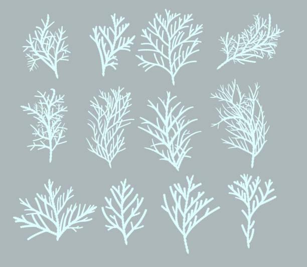 Winter branch set vector art illustration