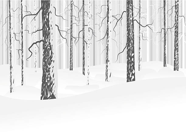 Winter deciduous forest Vector winter forest with snow. Trees with bark. Gray and white colors. Abstract background. black white snow scene silhouette stock illustrations