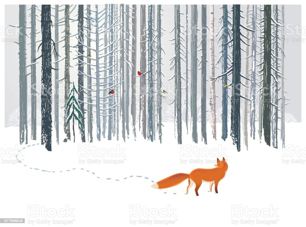 Winter forest and Fox. - Illustration vectorielle