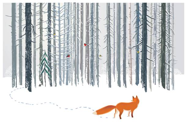 Winter forest and Fox. - ilustración de arte vectorial