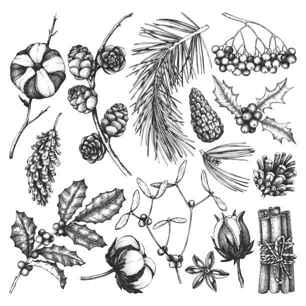 winter forest plants collection - gałązka stock illustrations