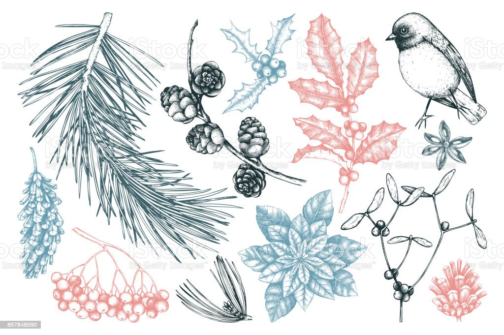 winter forest plants collection