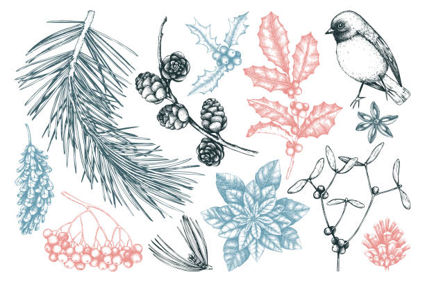 winter forest plants collection Vector collection of hand drawn christmas decor elements with bird. Vintage winter plants sketch set. Conifers, berries, flowers, cones, seeds illustration. Outlines. Holiday design. bird drawings stock illustrations