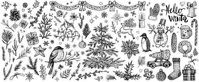 Winter hand drawn sketches. Vector vintage Christmas plants and symbols.