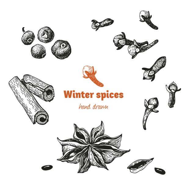 Winter spices isolated on white vector hand drawn illustration vector art illustration