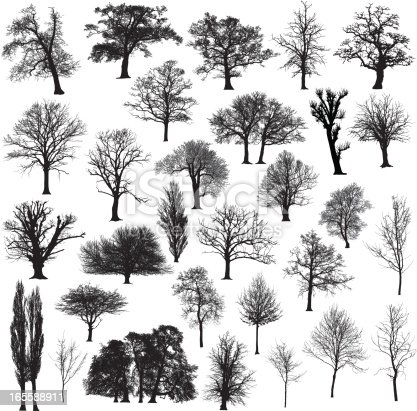 Thirty different, detailed and beautiful winter tree silhouettes.