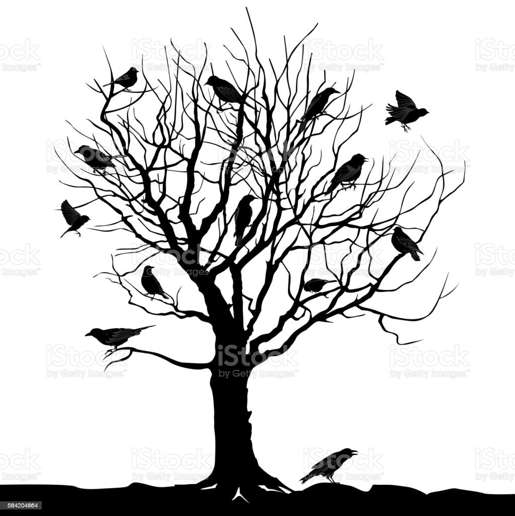 Winter Tree With Birds On Twig Nature Wildlife Silhouette ...