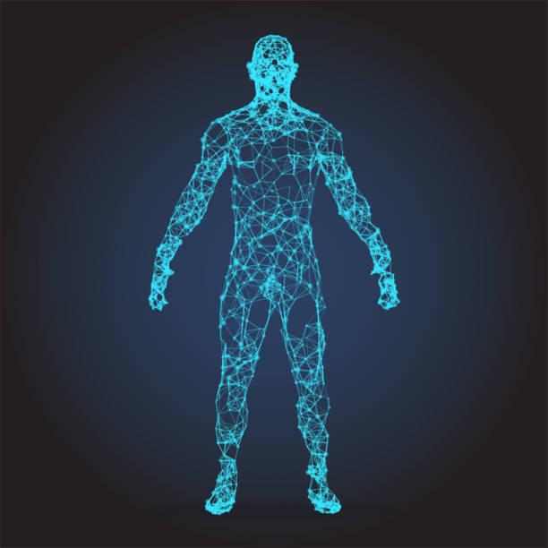 illustrazioni stock, clip art, cartoni animati e icone di tendenza di telaio in filo 3d corpo umano polygonal low poly - il corpo umano